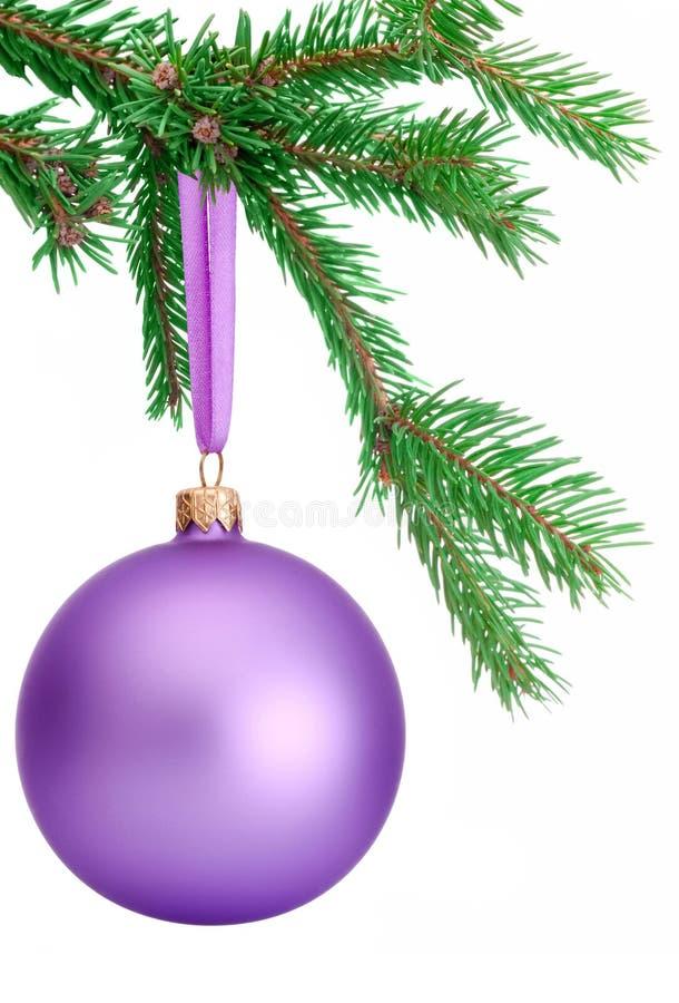 Bola roxa do Natal que pendura em um ramo de árvore do abeto isolado foto de stock