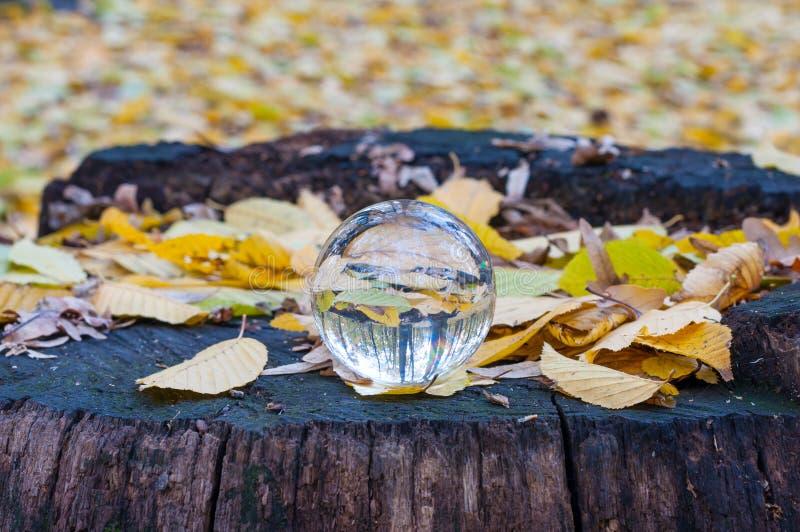 Bola transparente de vidro com as folhas de outono amarelas fotografia de stock royalty free