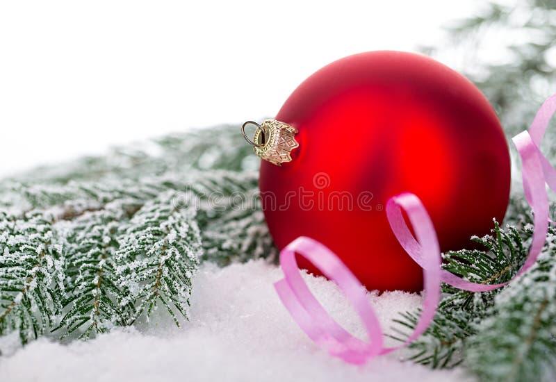 Bola vermelha bonita do Natal na árvore de abeto gelado Ornamento do Natal fotografia de stock