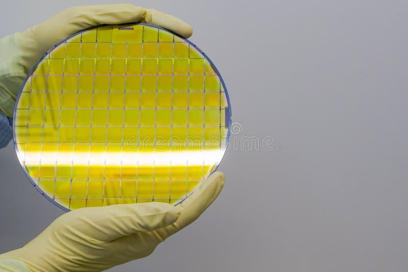 A bolacha de silicone é realizada nas mãos por luvas - uma bolacha é uma fatia fina de material do semicondutor, tal como um sili imagem de stock