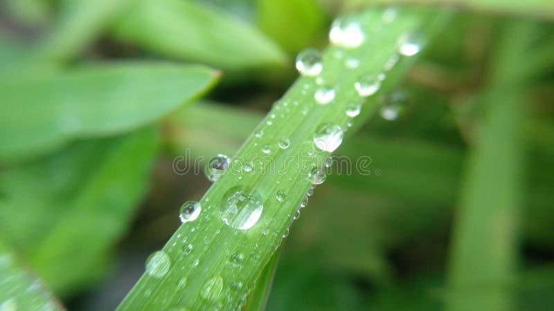 bolas da bola da água fresca que colam à grama foto de stock