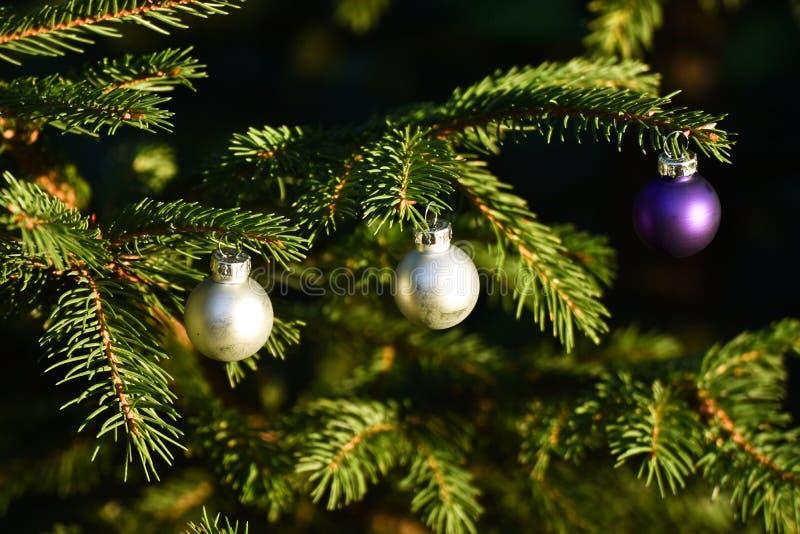 Bolas de plata y púrpuras en el árbol de navidad al aire libre de la conífera imágenes de archivo libres de regalías