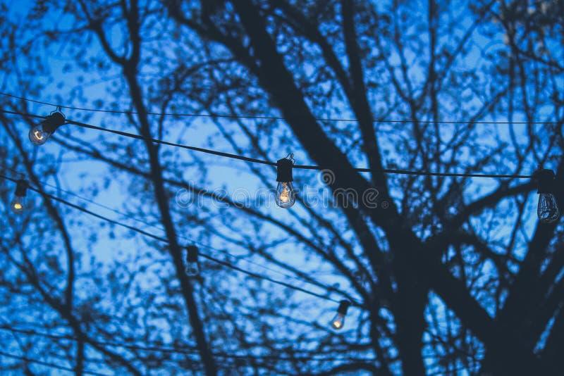 Bolbos de rua festivos, com iluminação esfestiva, pendurados em cabos do lado de fora num parque durante a noite azul imagem de stock royalty free
