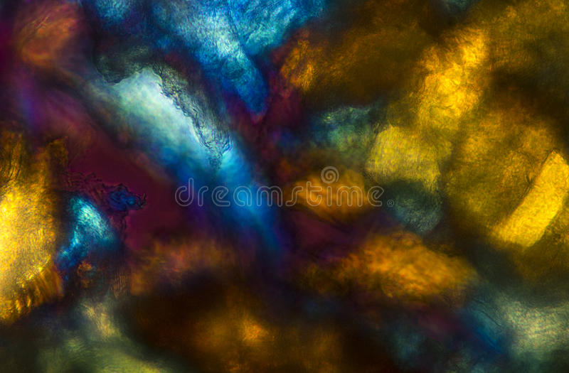 Bold, colorful abstract micrograph of bumble bee muscle and cara stock photos