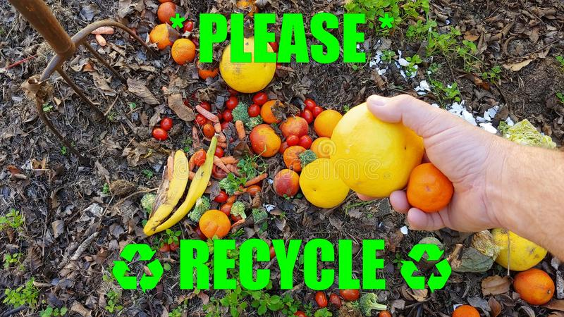 Bold Text In Florescent Green - Please Recycle Title - An Adult Male Hand Tossing Discarded Citrus Into A Compost Pile.  royalty free stock images