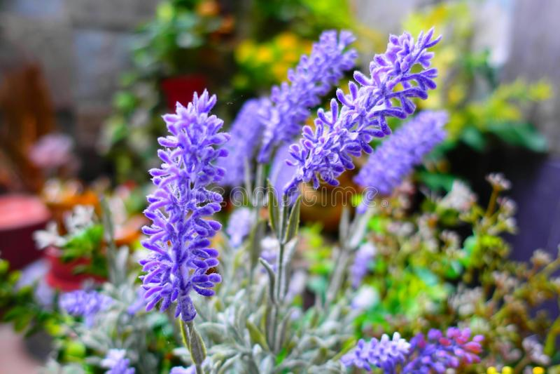 Boleh of flowers royalty free stock photos