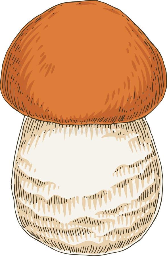 Boleto Seta comestible ilustración del vector