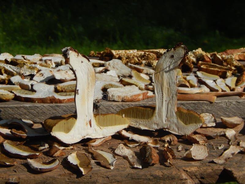 Boletus φαγώσιμες φέτες μανιταριών στο ξύλινο υπόβαθρο στοκ φωτογραφία με δικαίωμα ελεύθερης χρήσης