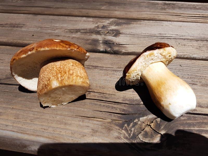 Boletus de champignon au-dessus de fond en bois Autumn Cep Mushrooms Boletus de cèpes edulis au-dessus du fond foncé en bois, fin photo libre de droits
