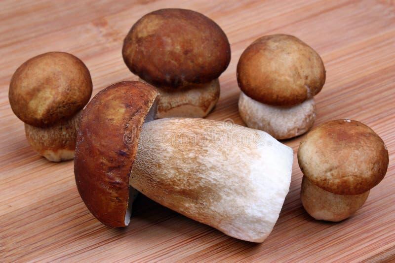 Boletus de cinq champignons photographie stock libre de droits