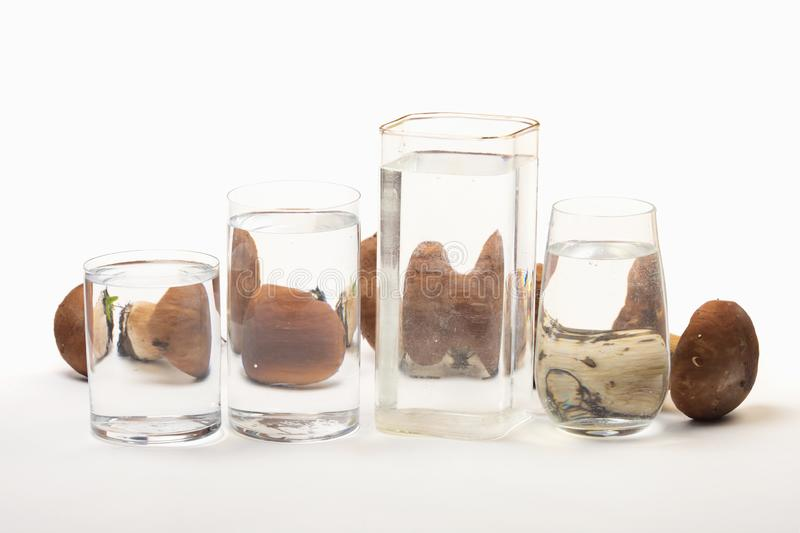 Boletus edulis distorted through liquid and glass on white background. Perspective, fractured and skewed images of common foods as seen through vessels filled stock image