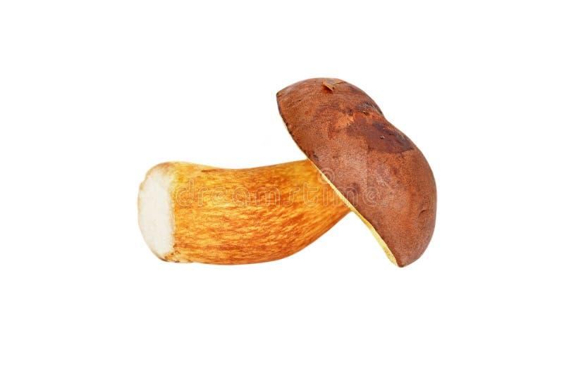 Boletus edulis mushroom stock photos