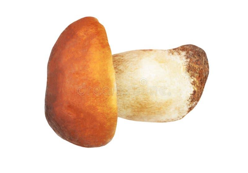 Boletus edulis mushroom stock photo