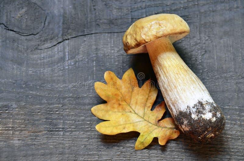 Boletus edulis mushroom on old wooden background. Autumn Cep mushrooms. Porcini. royalty free stock photos