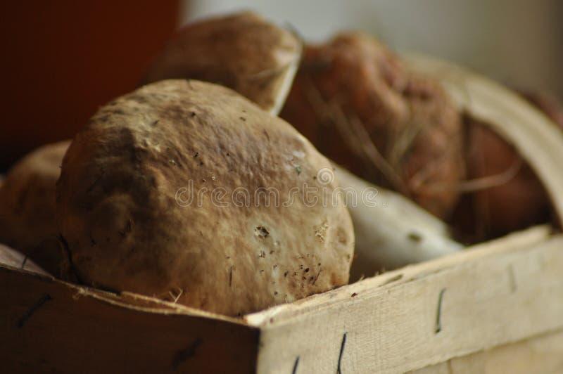 Boletus Essbare Pilze, die in einem Korb, Lubyanka liegen pilzkopfbildung stockfotografie