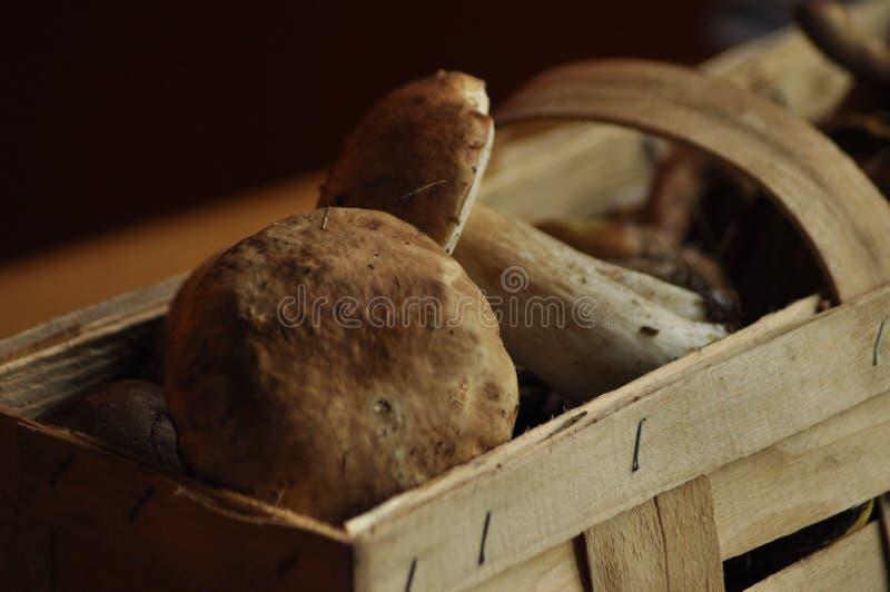 Boletus Essbare Pilze, die in einem Korb, Lubyanka liegen pilzkopfbildung stockfoto