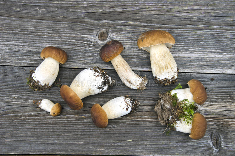 Boletus frais de cèpe de mushrom de champignons de groupe photo stock