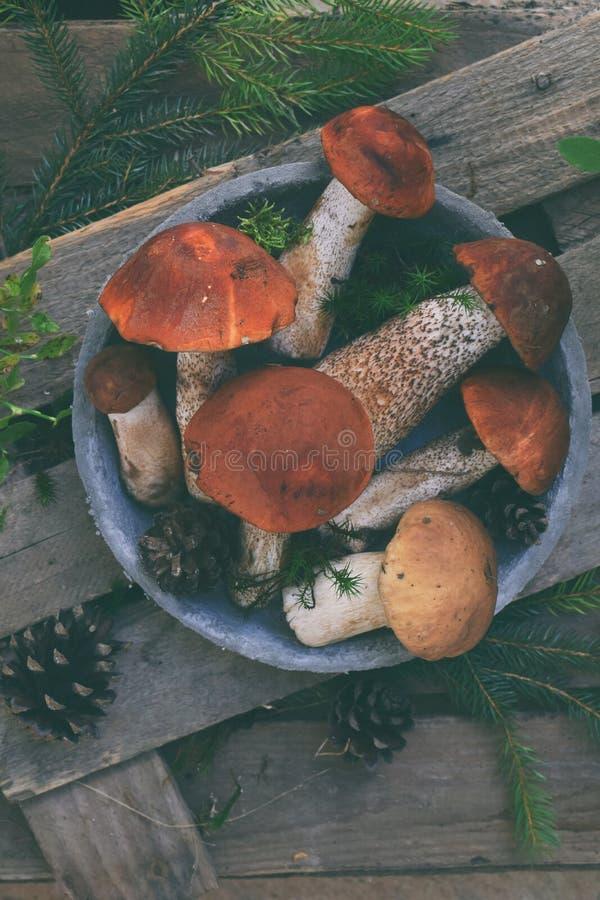 Boletus rouge de chapeau sur le fond en bois Champignons sauvages de Brown Le Leccinum fongueux comestible Aurantiacum s'est rass images stock