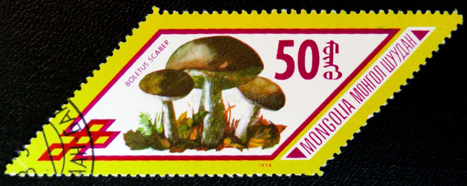 Boletus Scaber mushrooms, series, circa 1978. MOSCOW, RUSSIA - JANUARY 7, 2017: A stamp printed in Mongolia shows Boletus Scaber mushrooms, series, circa 1978 stock images