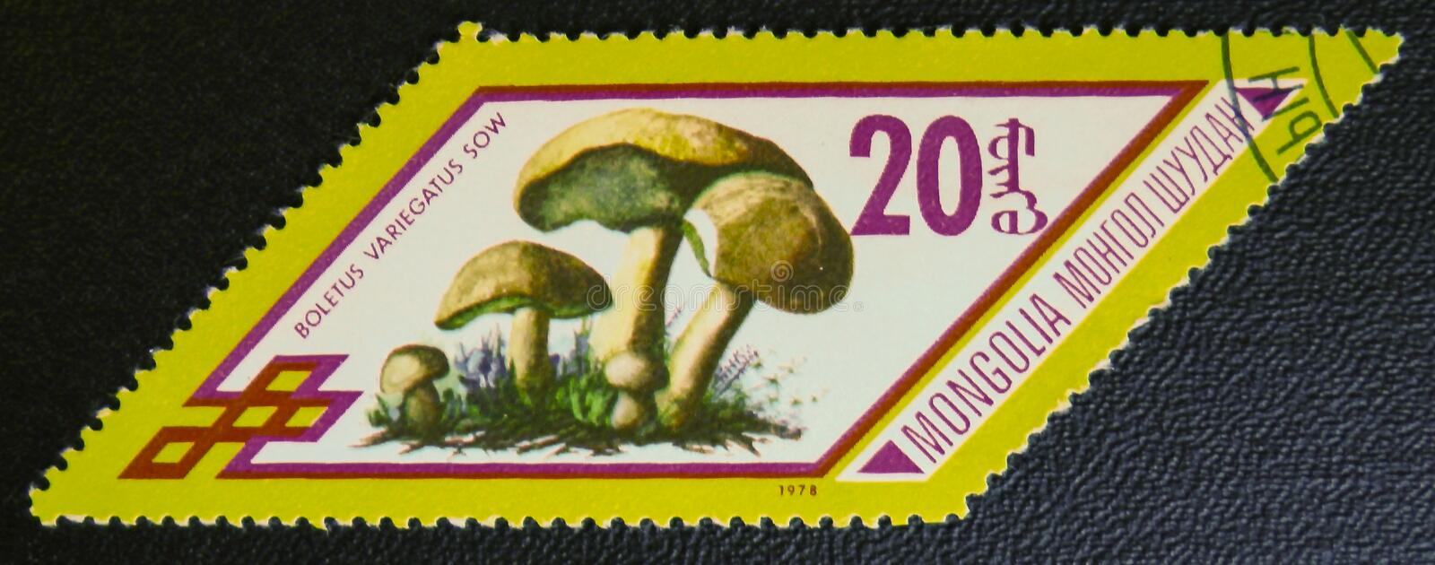Boletus variegatus sow, circa 1978. MOSCOW, RUSSIA - JANUARY 7, 2017: A stamp printed in Mongolia shows Boletus variegatus sow mushrooms, series, circa 1978 royalty free stock photography