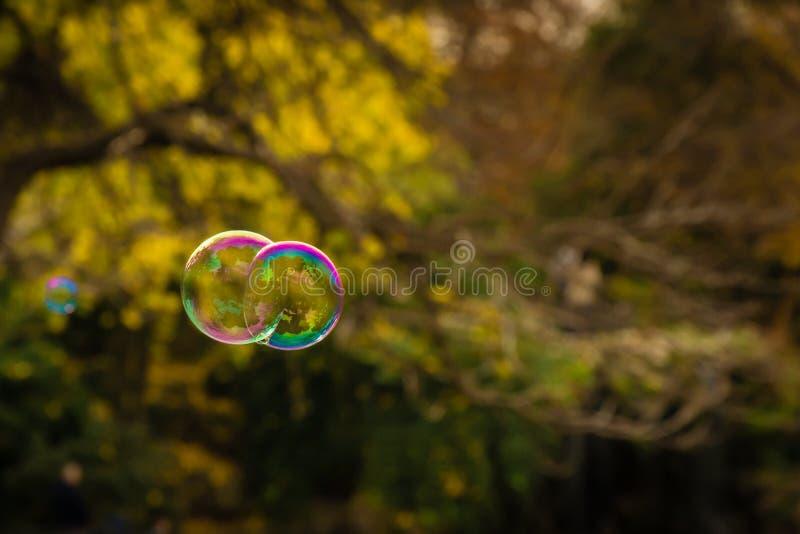 Bolhas azuis e verdes roxas que flutuam perto de um fundo do outono fotografia de stock