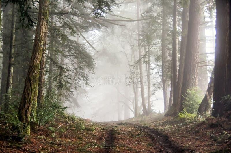 Bolinas里奇有雾的森林  库存照片