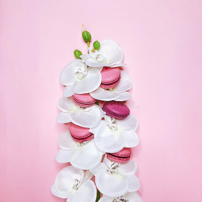 Bolinhos de amêndoa cor-de-rosa no fundo cor-de-rosa com flores foto de stock