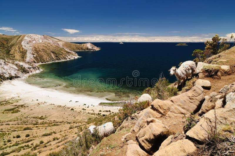 bolivia Del Isla jeziora krajobrazu zolu titicaca zdjęcia stock