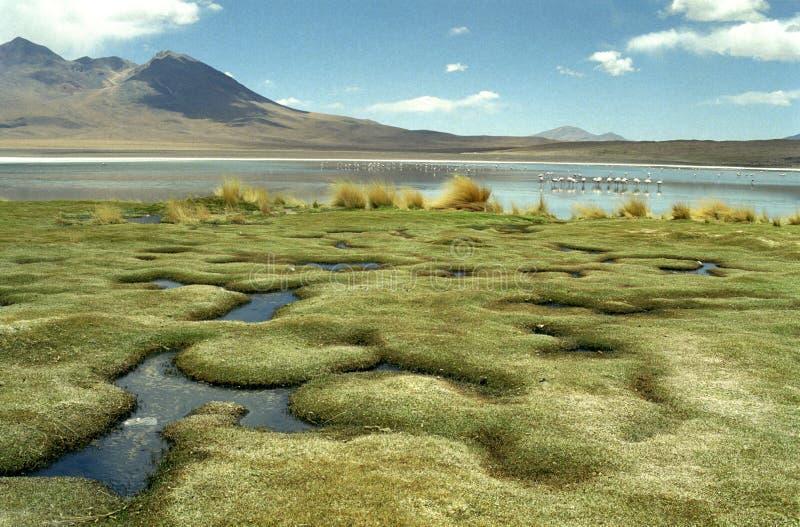 Bolivia del sur fotografía de archivo libre de regalías