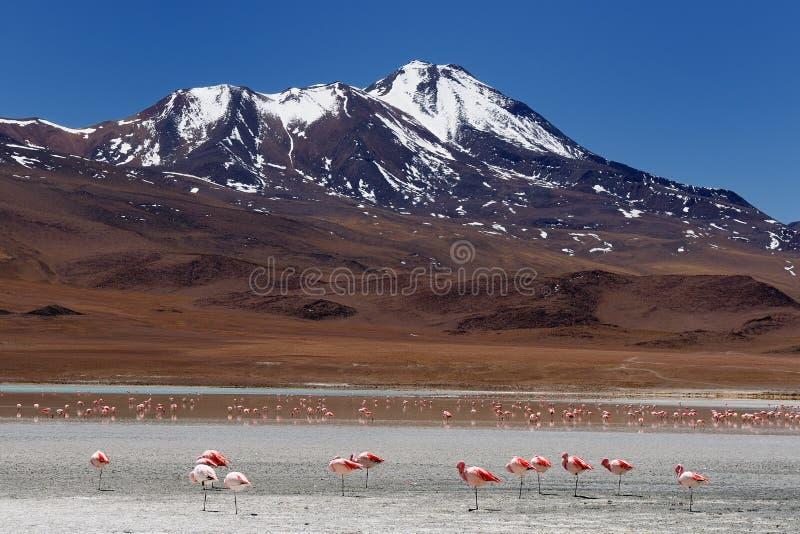 Download Bolivia -  Eduardo Avaroa National Park Stock Photo - Image: 21815474