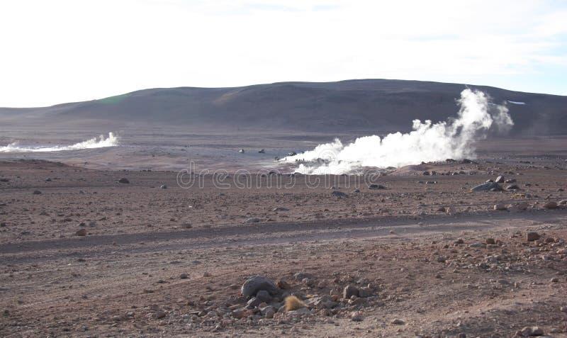 bolivia geysers fotografering för bildbyråer