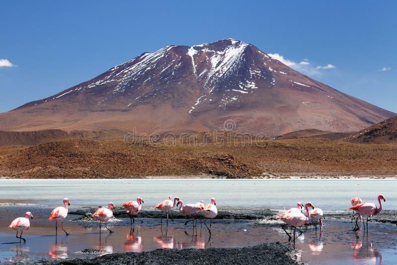 Bolivia - parque nacional de Eduardo Avaroa fotografía de archivo