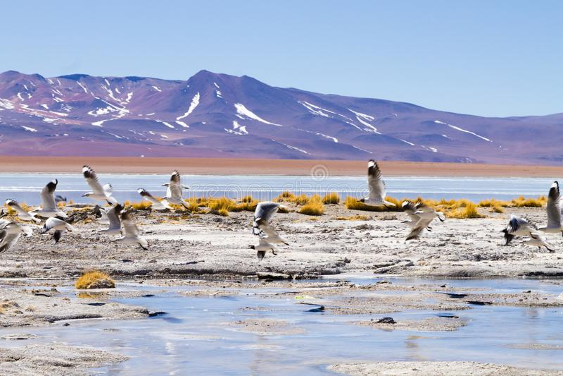 Bolivian lagoon landscape,Bolivia. Bolivian lagoon landscape, Aguas Termales de Polques,Bolivia chalviri hot springs termas air altiplano altitude america andean stock photo