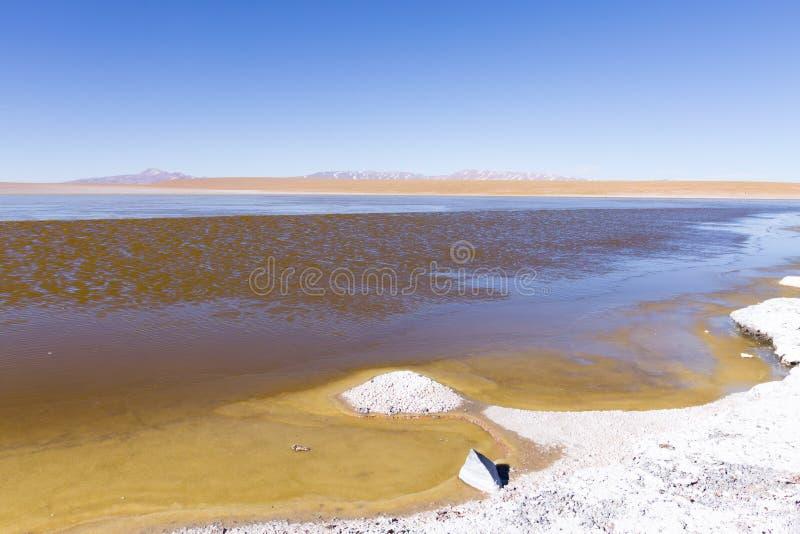 Bolivian lagoon view,Bolivia. Kollpa Kkota lagoon view. Collpa Laguna stock image