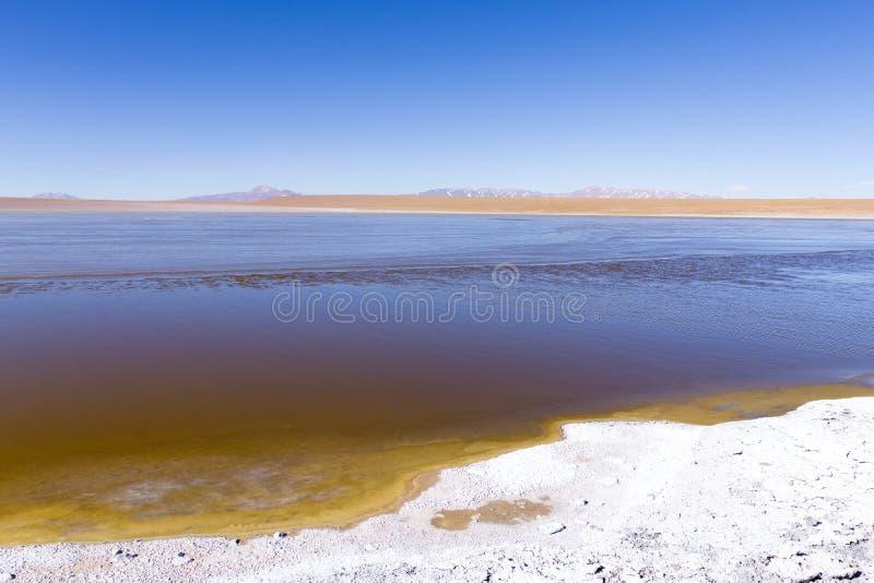 Bolivian lagoon view,Bolivia. Kollpa Kkota lagoon view. Collpa Laguna stock photos