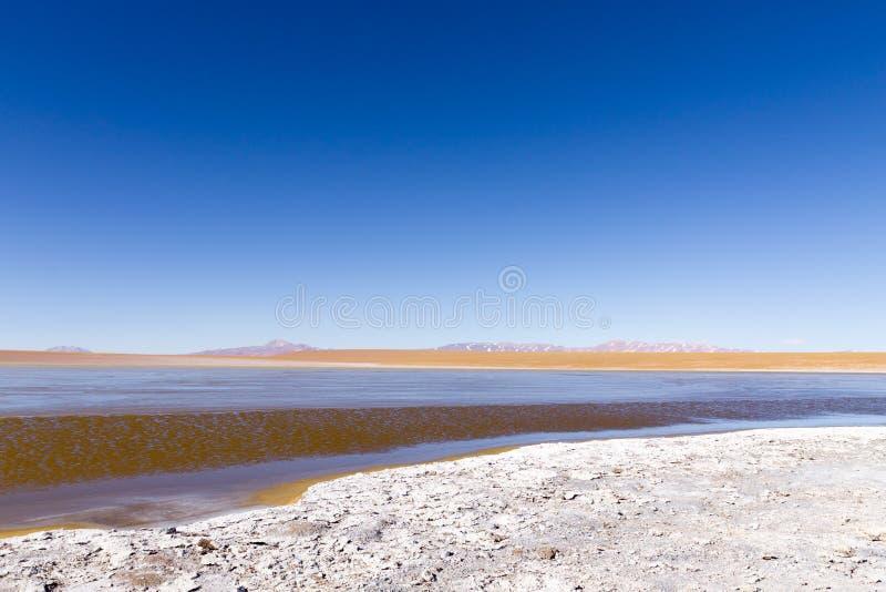 Bolivian lagoon view,Bolivia. Kollpa Kkota lagoon view. Collpa Laguna potosi altiplano altitude america andean andes beauty blue bush colored colorful desert stock image