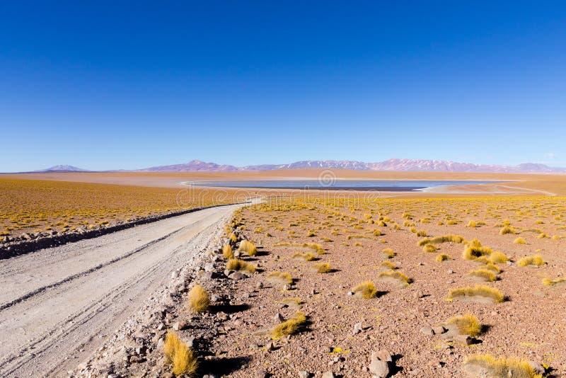 Bolivian lagoon view,Bolivia. Kollpa Kkota lagoon view. Collpa Laguna, potosi, altiplano, altitude, america, andean, andes, beauty, blue, bush, colored stock image