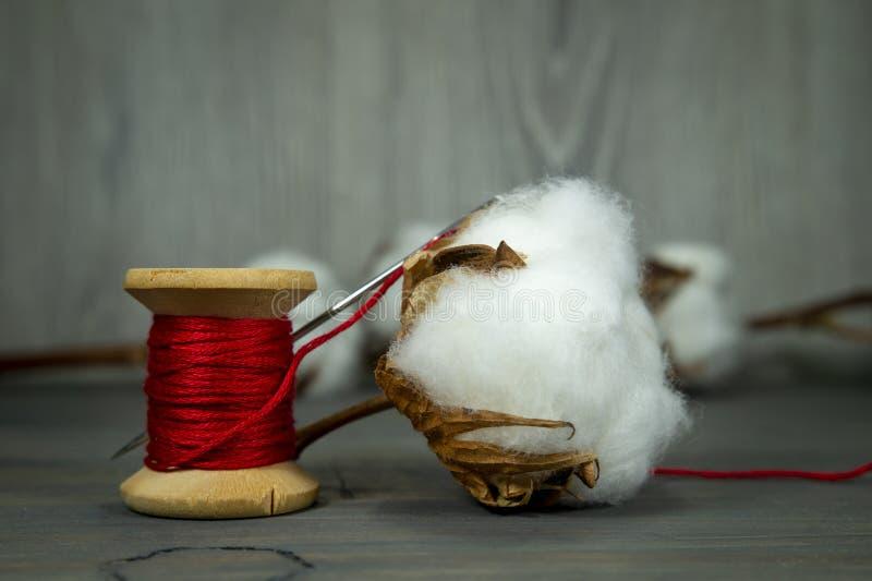 Boll de algodão com algodão natural imagens de stock