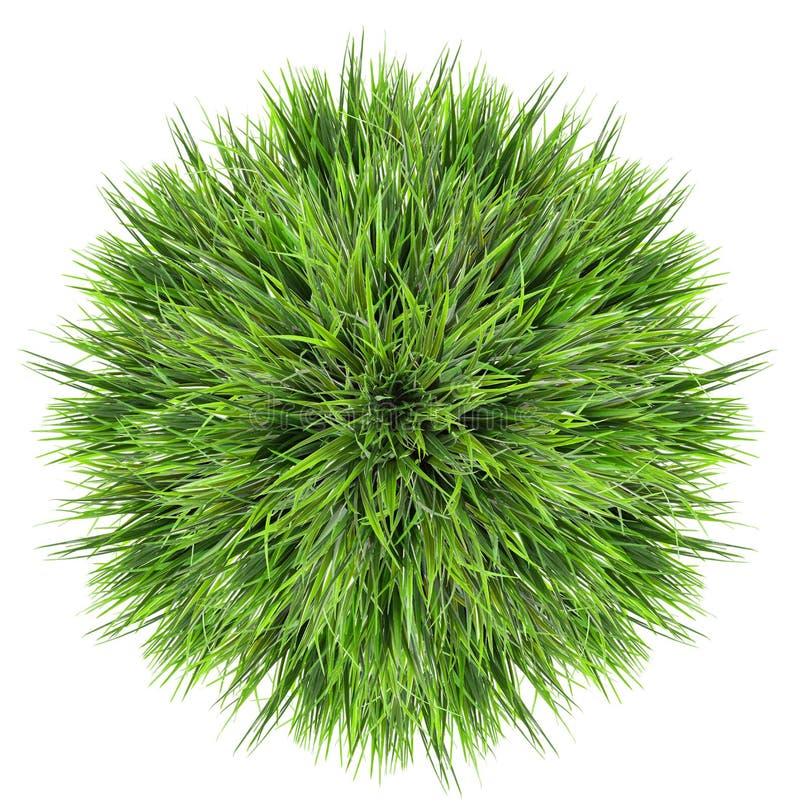 Boll för grönt gräs royaltyfria bilder