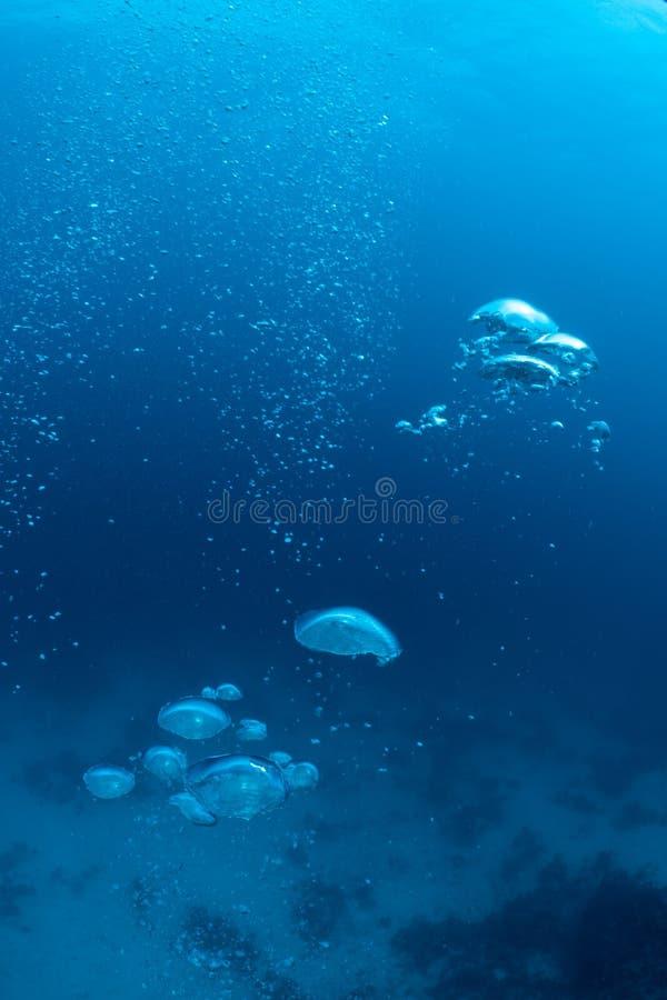 Bolle da un subaqueo fotografie stock libere da diritti