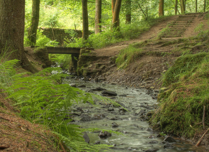 Bollin Brook. A quiet place to sit, next to the bubbling Bollin Brook, on one of the many peaceful walks through Macclesfield Forest, United Kingdom stock image