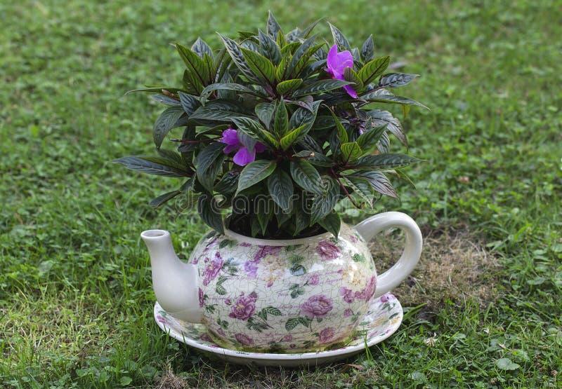 Bollitore dei vasi del giardino con i fiori immagine stock for Vasi erba