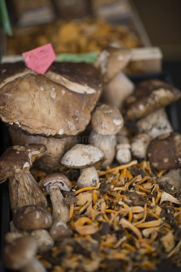 Bollo del penique de la seta, cep, porcino o porcini y cibarius de oro amarillo del cantharellus del mízcalo imagen de archivo