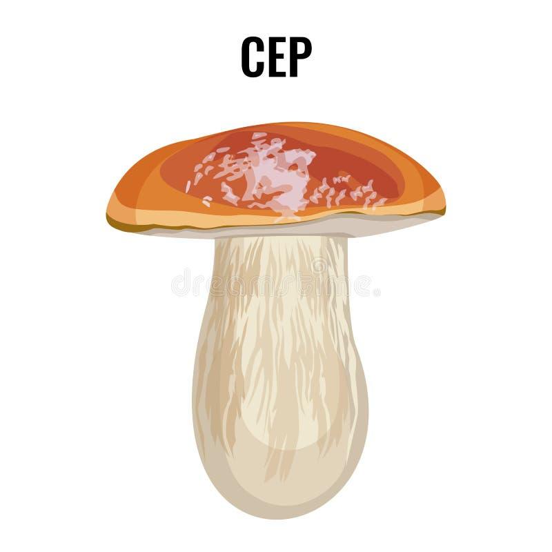 Bolo, cepa-de-bordéus, porcino ou porcini da moeda de um centavo do cepa-de-bordéus do fungo do cepa-de-bordéus ilustração do vetor