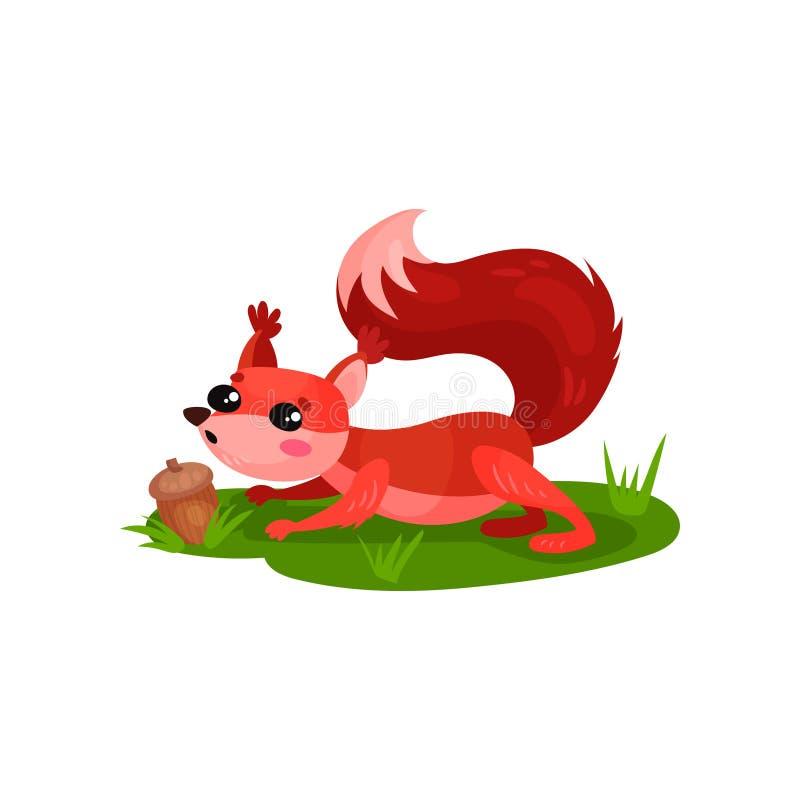 Bolota encontrada adorável do esquilo vermelho na grama Roedor da floresta com olhos brilhantes e os mordentes cor-de-rosa Vetor