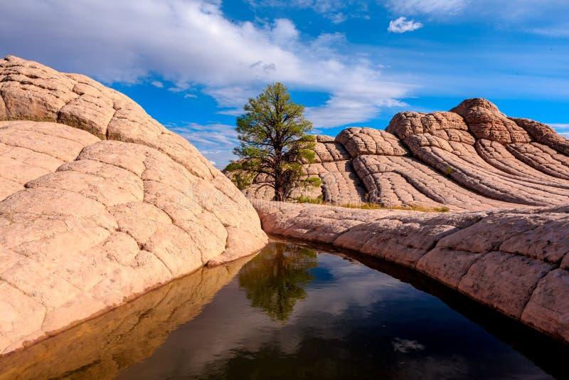 Bolsillo blanco, Arizona, los E.E.U.U. foto de archivo