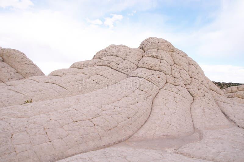 Bolsillo blanco en la meseta de Paria foto de archivo