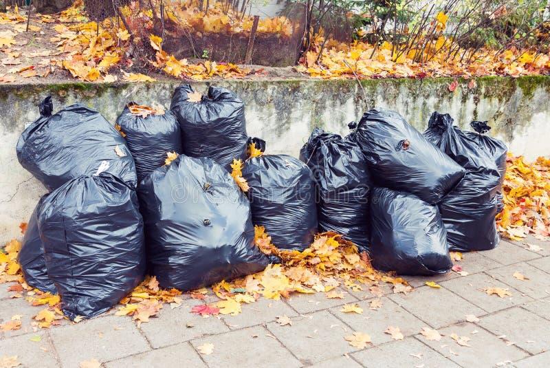 Bolsos de basura plásticos por completo de hojas en el otoño imagenes de archivo