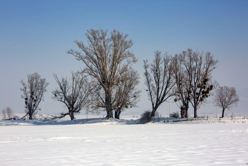 Bolu / Turkey, winter snow season landscape. Travel concept photo.  royalty free stock photos