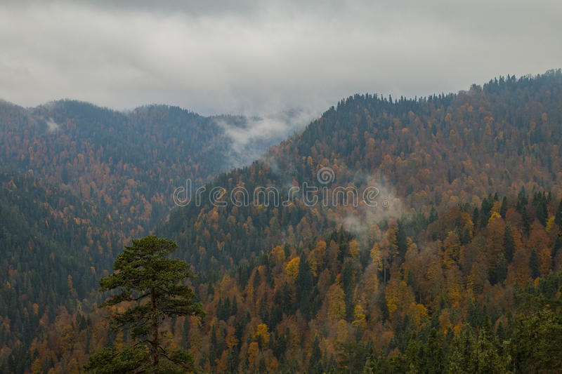 Bolu - Yedigöller Seven Lakes National Park. The Yedigoller Seven Lakes National Park is in the north of the Bolu province, and south of Zonguldak in the royalty free stock photo